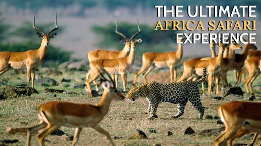 The Ultimate Africa Safari Experience