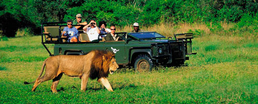 Image result for African Safari Tours