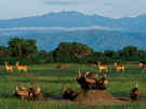 Special Interest Tours 1 - Best of Uganda