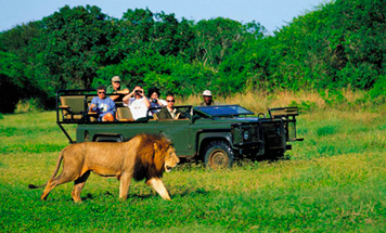 The Ultimate African Safari Tour